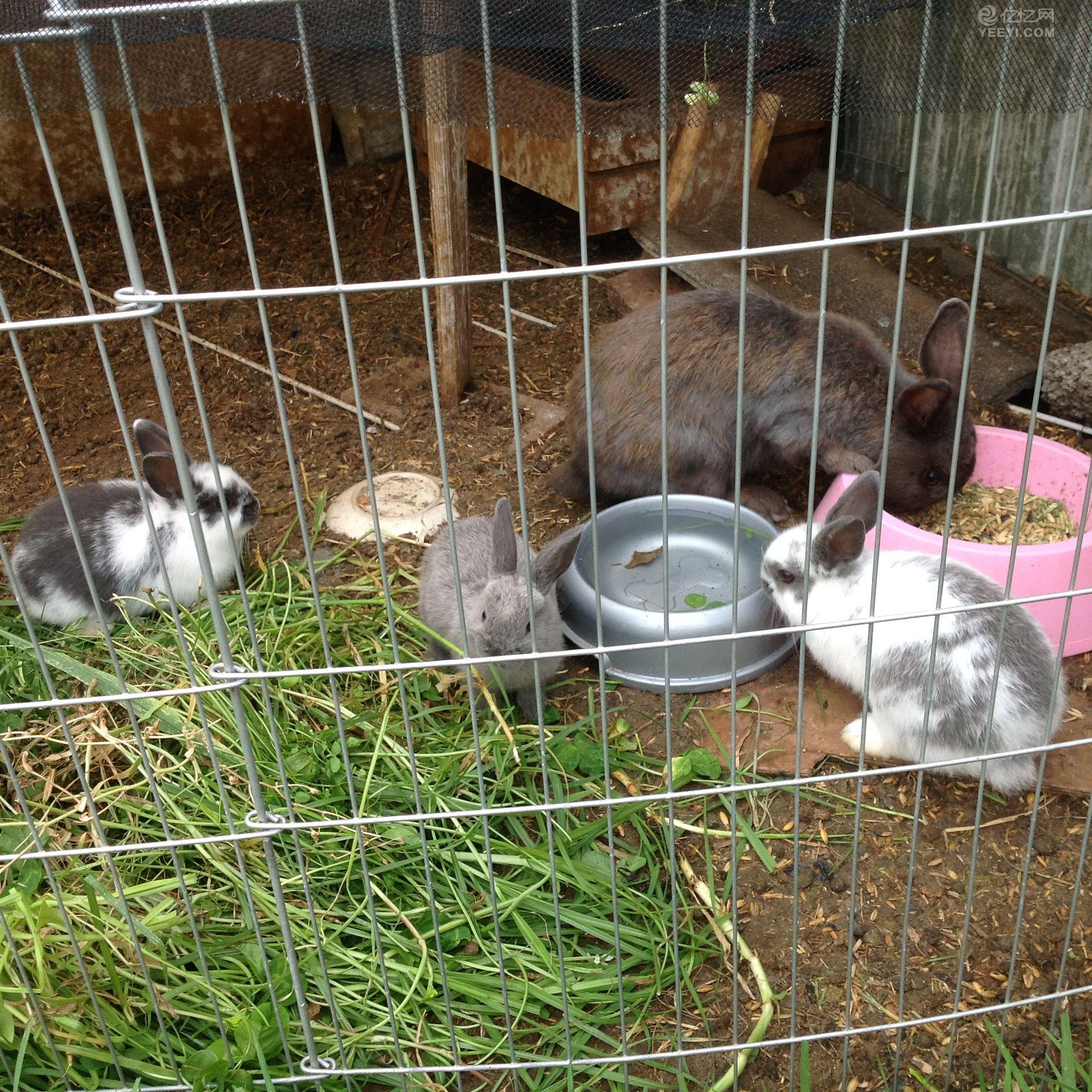 小兔子出售